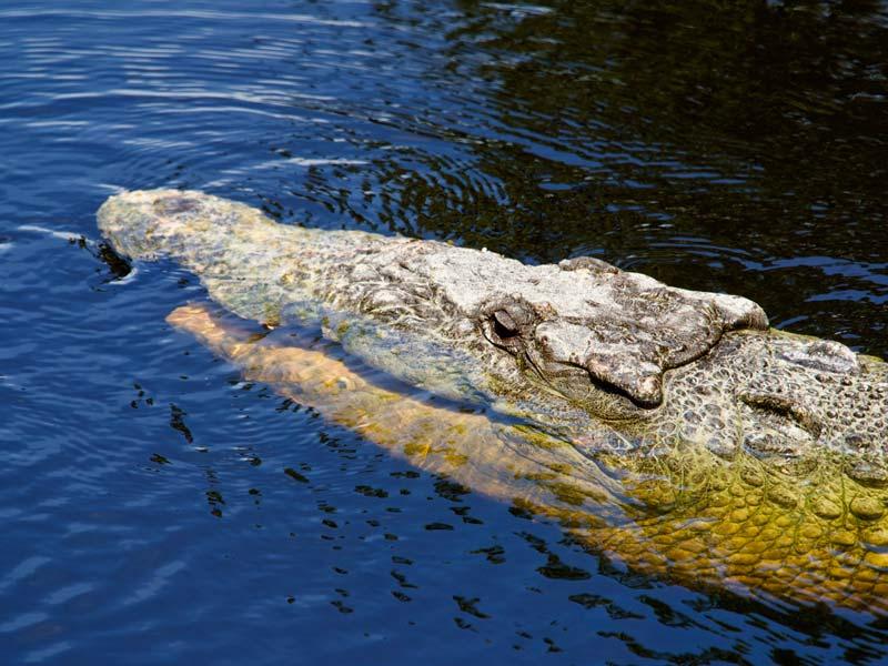 Florida rondreis croc