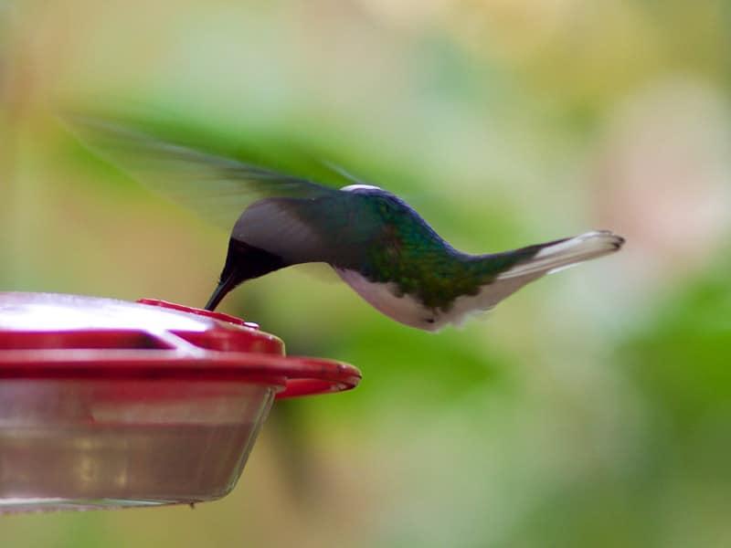 kolibries Mindo Ecuador bezienswaardigheden