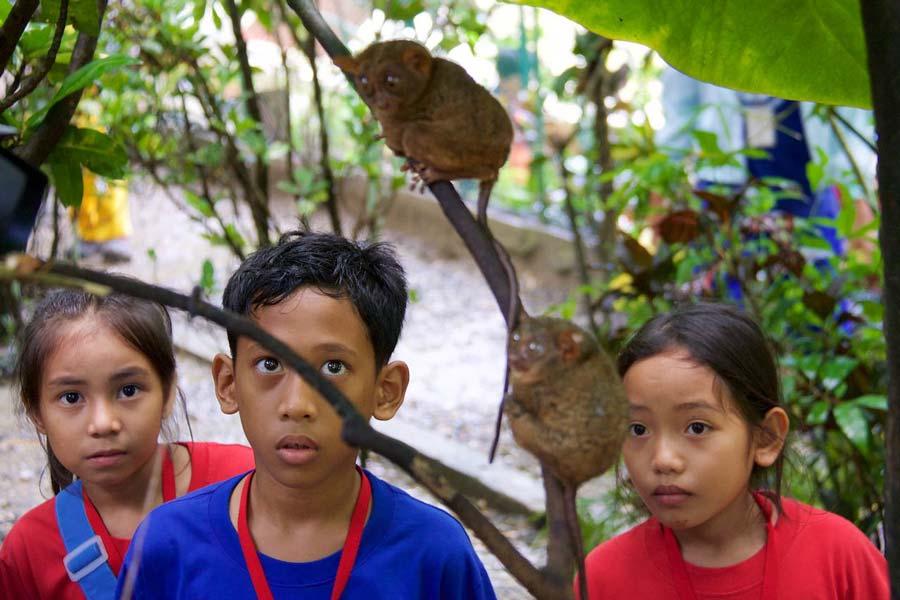 Bekijk spookdiertje Filipijnen eilanden