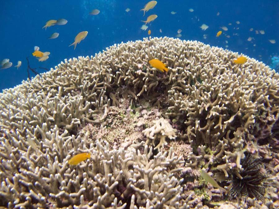 Koraalrif Filipijnen eilanden