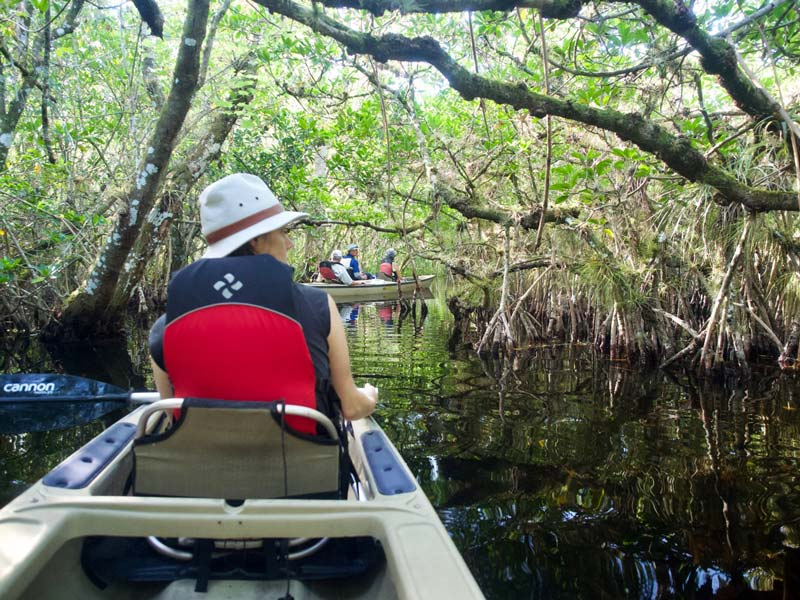 Florida rondreis Turner River met alligators