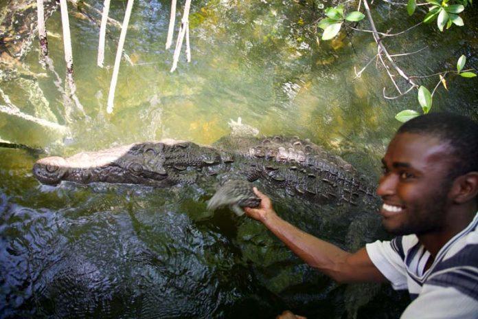 alligator aaien Jamaica vakantie tips