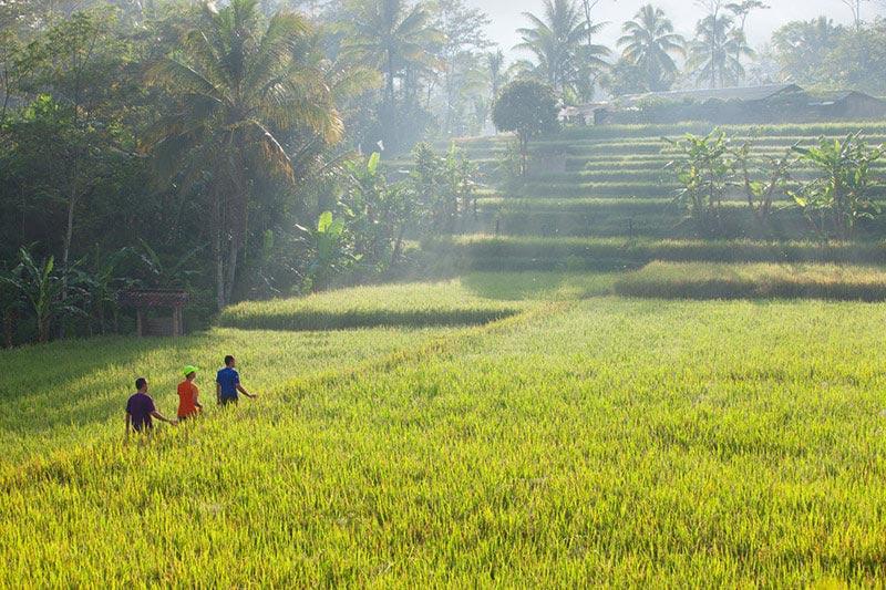 Voormalige koffieplantage Java Indonesie Midden
