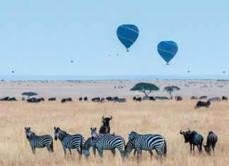 Kenia safari wildlife