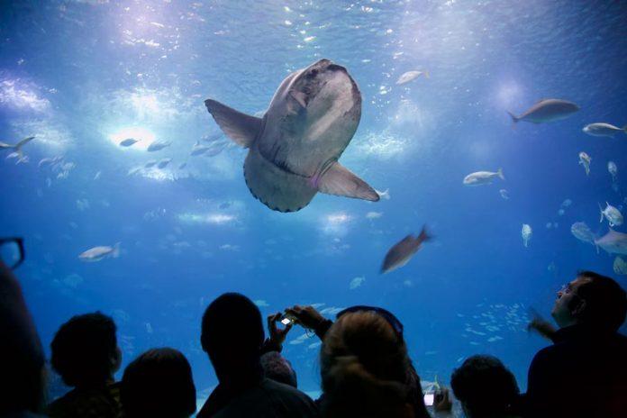 Lissabon bezienswaardigheden Aquarium