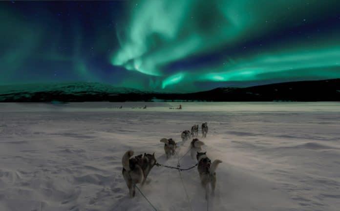 Sleerijden met husky's onder het noorderlicht Noorwegen