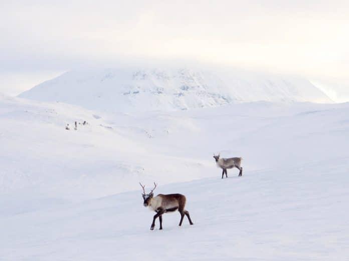 Noorderlicht Noorwegen wildlife