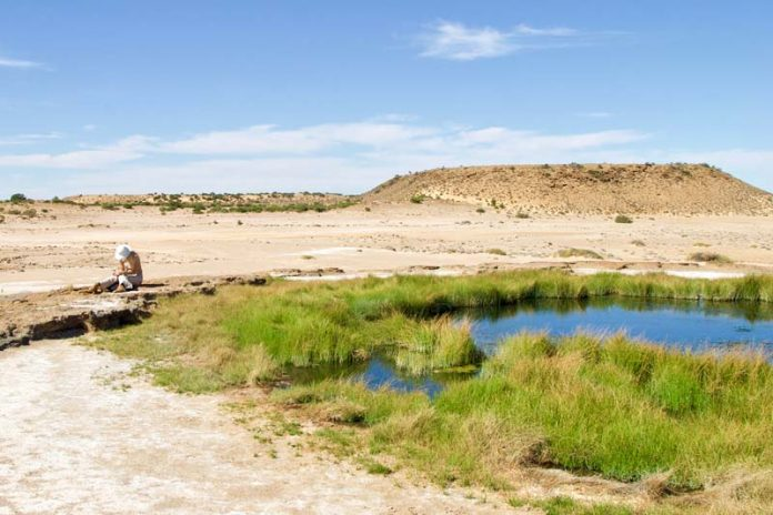 Oase Coward Springs Outback Australie