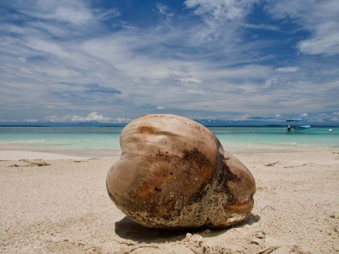 Panama vakantie kokosnoot betaalmiddel