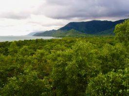 koraalrif en regenwoud Queensland Australie