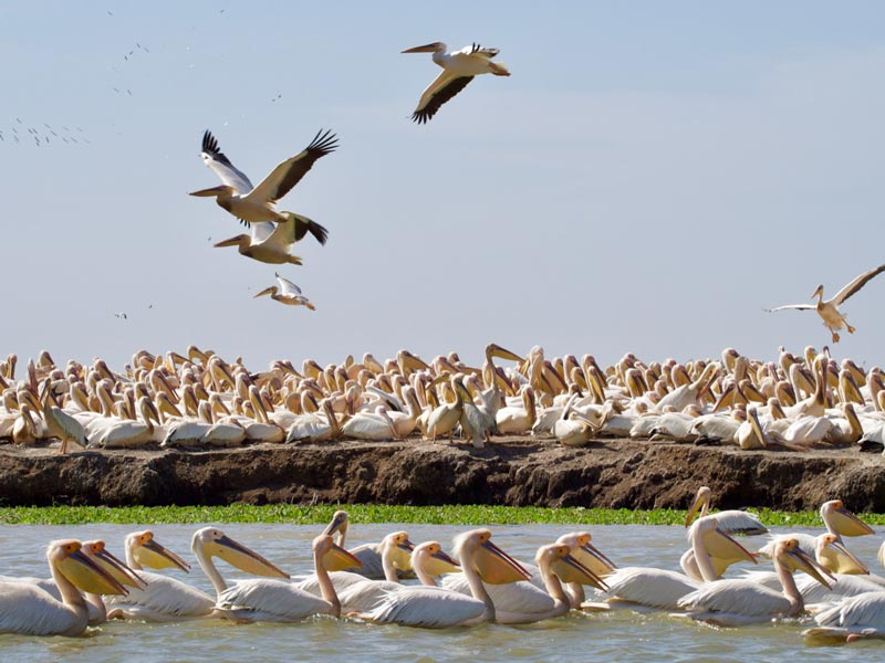 Senegal vakantie Djoudj National Bird Sanctuary