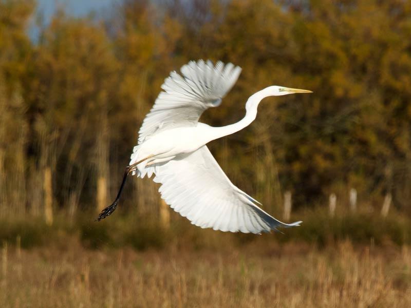 vogels Languedoc Roussillon