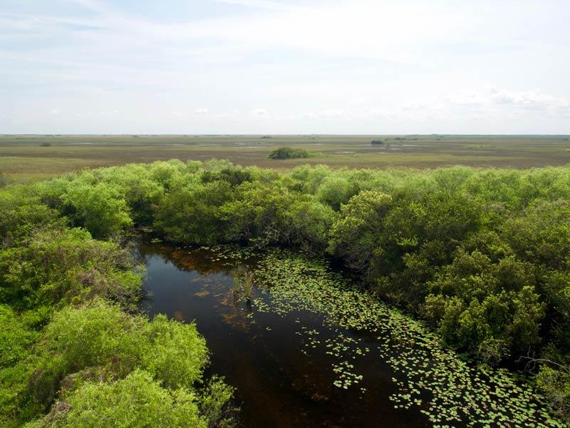 florida rondreis everglades natuurpark