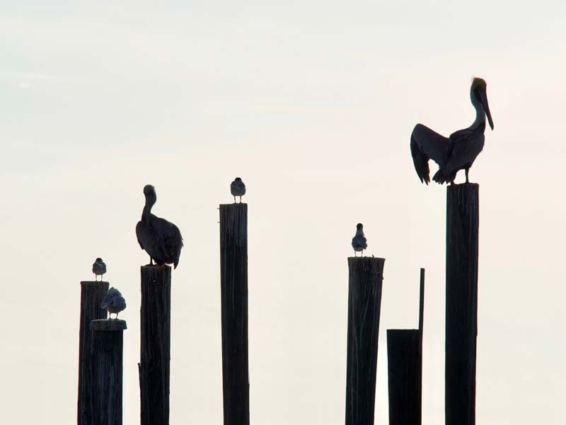 florida rondreis pelikanen zeekoeien