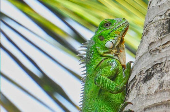 bonaire bezienswaardigheden wildlife