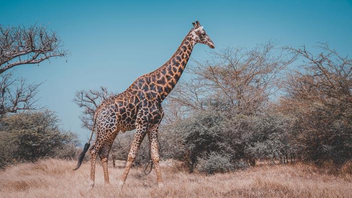 Nationaal Park Bandia Senegal vakantie