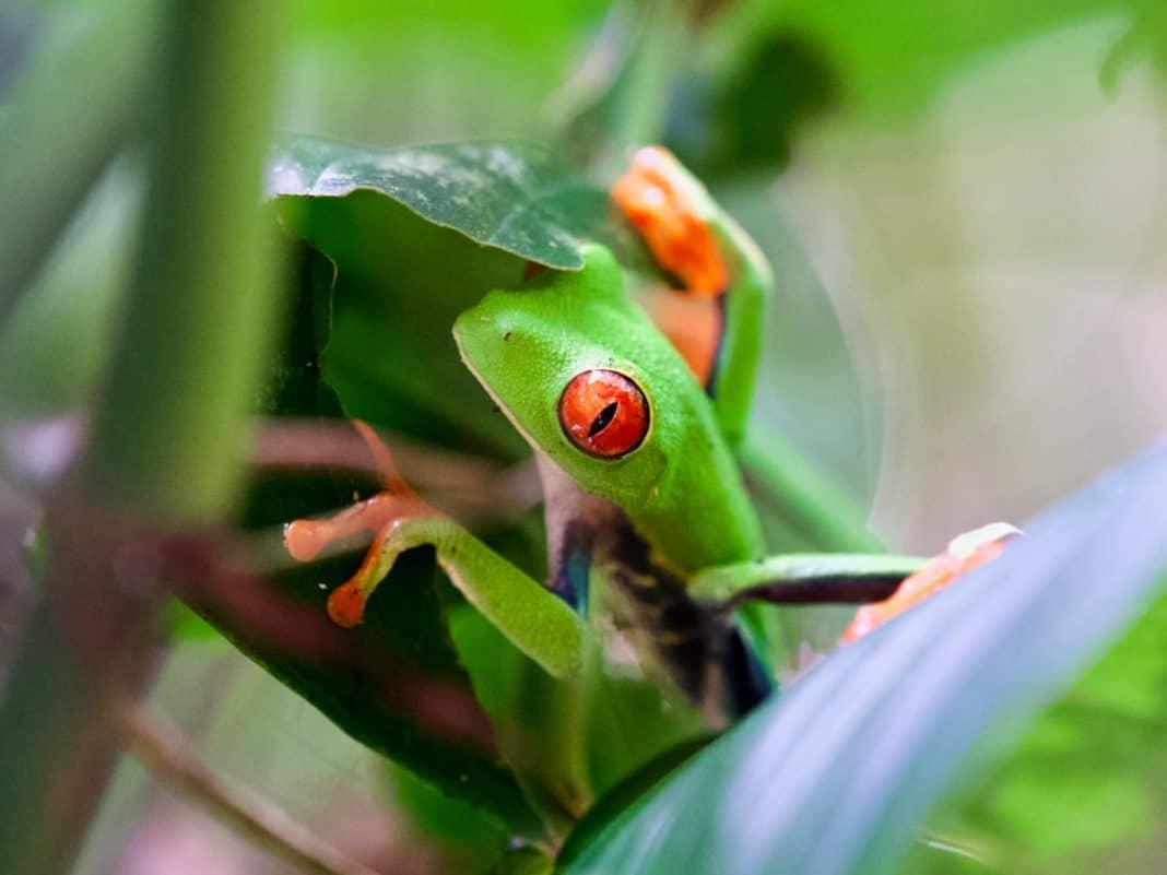 Costa Rica natuur Arenal