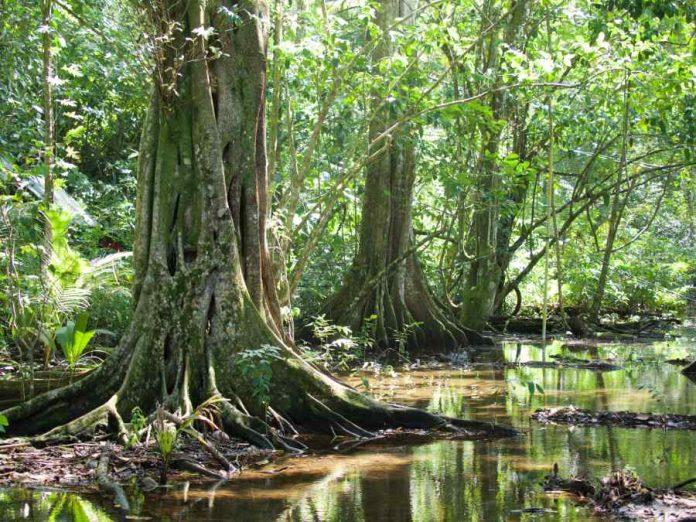 Costa Rica natuur Gandillo