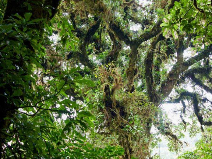 Costa Rica natuur Monteverde