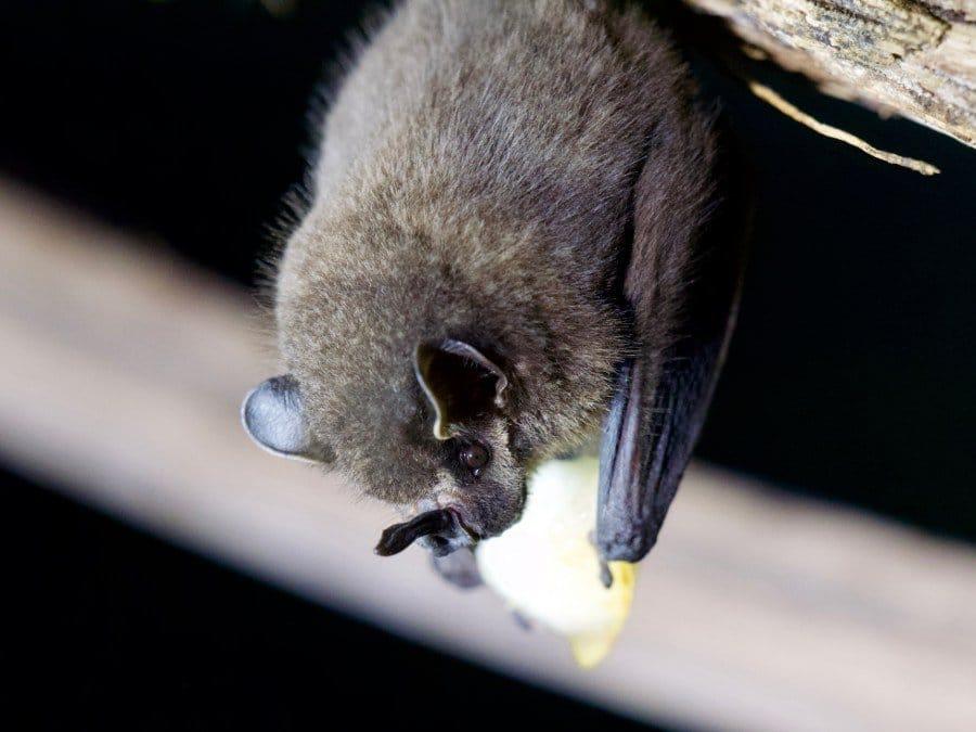 Costa Rica natuur Monteverde vleermuizen