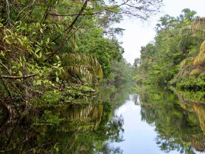Costa Rica natuur Tortuguero