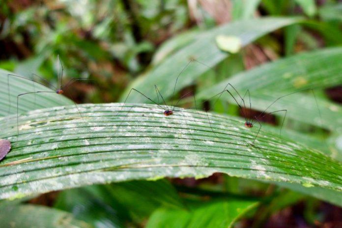 Costa Rica natuur Uvita