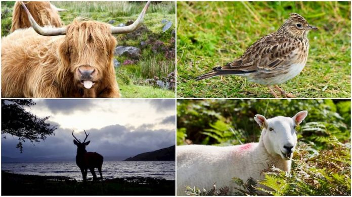 Wildlife op Skye